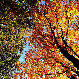 When Summer Meets Autumn