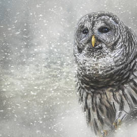 Jai Johnson - When Winter Calls Owl Art
