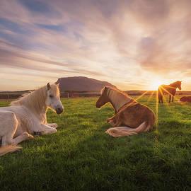Iurie Belegurschi - Where the Horses Roam