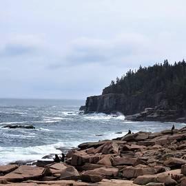 Where the Land Meets the Sea by Carol McGrath
