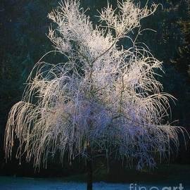 Teresa A Lang - Whimsical Winter Willow