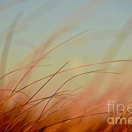 Debra Banks - Whispering Grass
