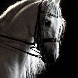 White Beauty In The Night by Wes and Dotty Weber