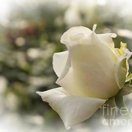 Inge Riis McDonald - White Beauty
