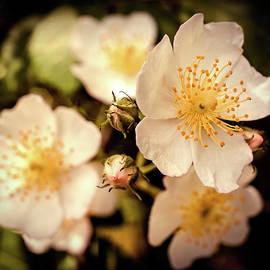 Lilia D - White bloom