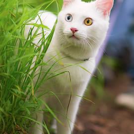 Mariia Kalinichenko - White cat for a walk