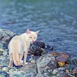 White Cat Near River