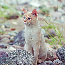 Oksana Ariskina - White Cat Sitting In Stones