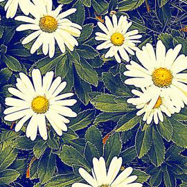 Susan Lafleur - White Chrysanthemums