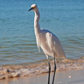 White Egret by George D Gordon III