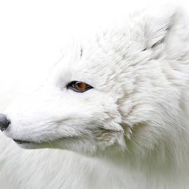 Athena Mckinzie - White Fox Profile