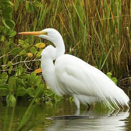 Great Egret by Edie Ann Mendenhall