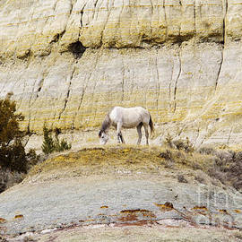 White horse on a mound by Jeff Swan