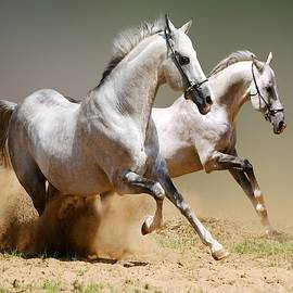 White Horses by Phyllis Spoor