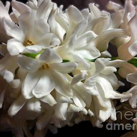 White Hyacinth by Jasna Dragun