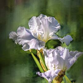 Leif Sohlman - White iris on abstract background #g4