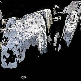 Lexa Harpell - White Lichen on Black Rocks