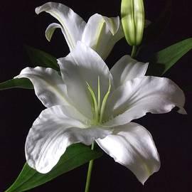 Delynn Addams - White Lily