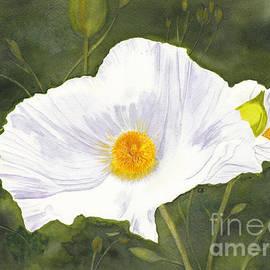 White Matilija Poppy  by Conni Schaftenaar