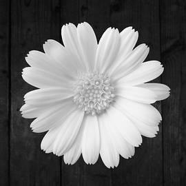 Johanna Hurmerinta - White On Wood