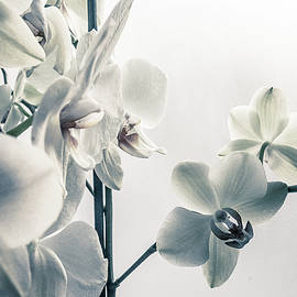 White Orchid Flowers on Blur Background Photo by Veronka Gora