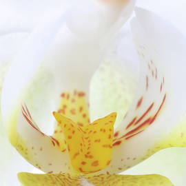 White Orchid Flower by Juergen Roth