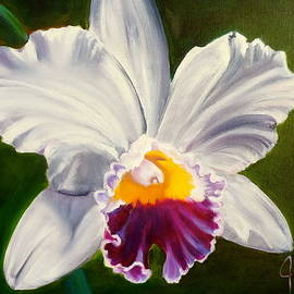 White Orchid by Jenny Lee