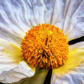 White Paeonia Japonica Flower - Garry Gay