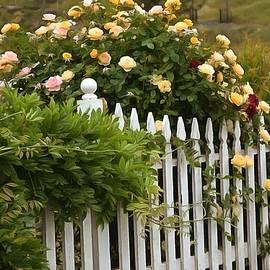 Barbara Snyder - White Picket Fence Harmony