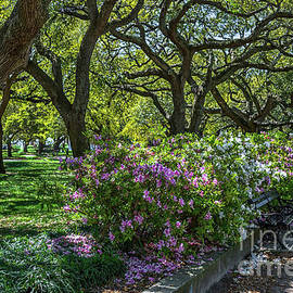 White Point Garden Spring Stroll by Dale Powell