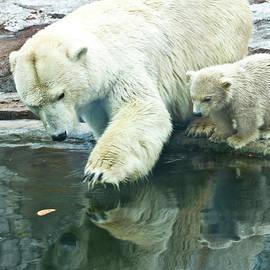 Irina Afonskaya - White polar bear with baby
