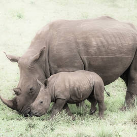 Cindi Alvarado - White Rhino and Baby