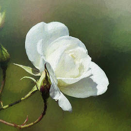 White Rose Painterly 2 by Linda Brody