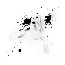 iMia dEsigN - White Saluki No 07