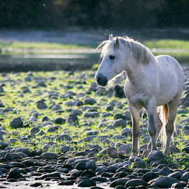 Saija Lehtonen - White Stallion Riverside