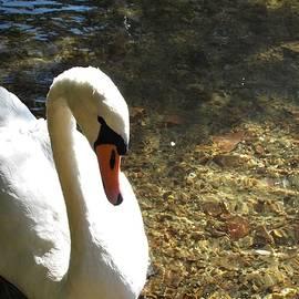 Marta Kazmierska - White Swan