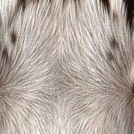 White Tiger Eyes - Rachel Stribbling