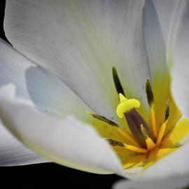 Teresa Mucha - White Tulip Center