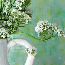 Sandra Foster - White Valarian Flowers Still Life