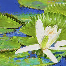 HH Photography of Florida - White Water Lily Impressionism