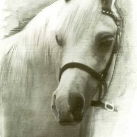 White Welsh Pony by Ryn Shell