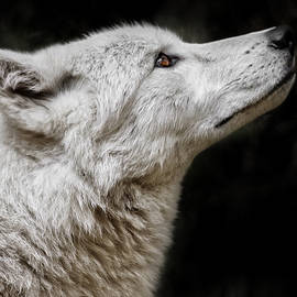 Wes and Dotty Weber - White Wolf