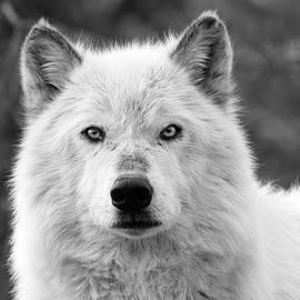 Steve McKinzie - White Wolf Encounter