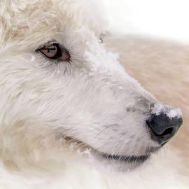 Athena Mckinzie - White Wolf Portrait II