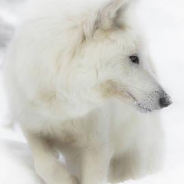 Athena Mckinzie - White Wolf Snow Bound