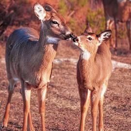 Peter Samuel - Whitetail deer - tender moment