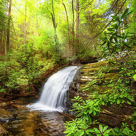 Debra and Dave Vanderlaan - Whitewater Rushing Through the Forest
