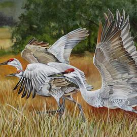 Phyllis Beiser - Sandhill Cranes In A Field