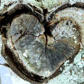 Lori Pessin Lafargue - Why Hippies Hugged Trees