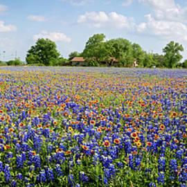 Lynn Bauer - Wild About Round Rock Wildflowers Panorama